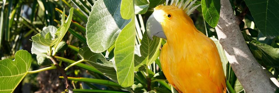 Tipps zur Auspflanzung von Palmen im Freiland