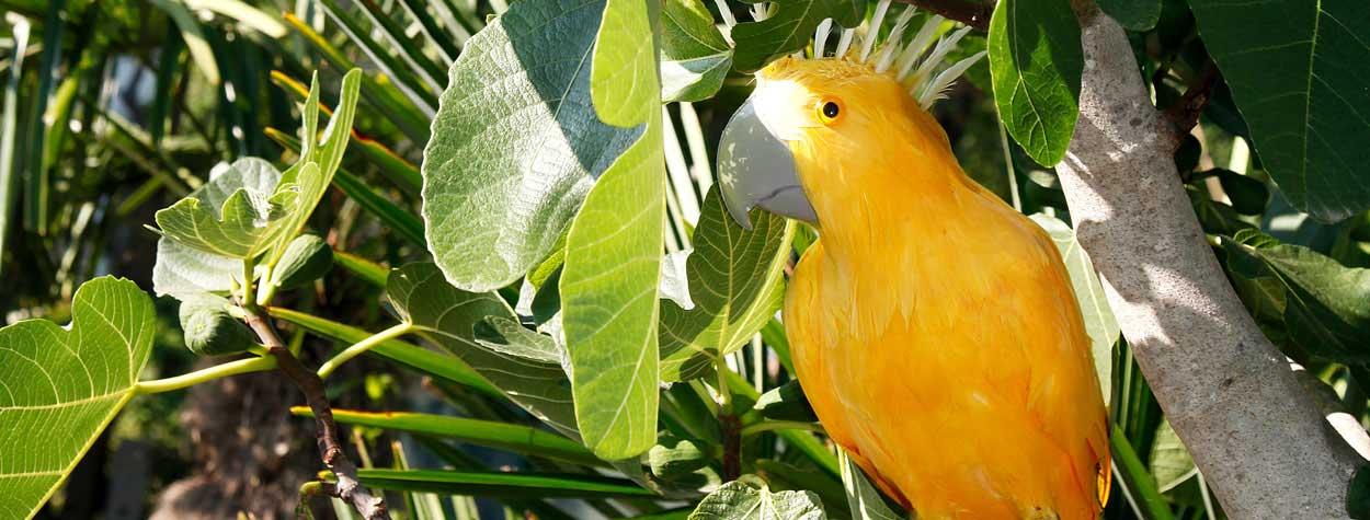 Tipps zur Auspflanzung<br /> von Palmen im Freiland
