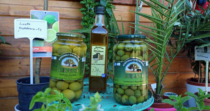 Oliven Produkte aus spanischem Familienbetrieb