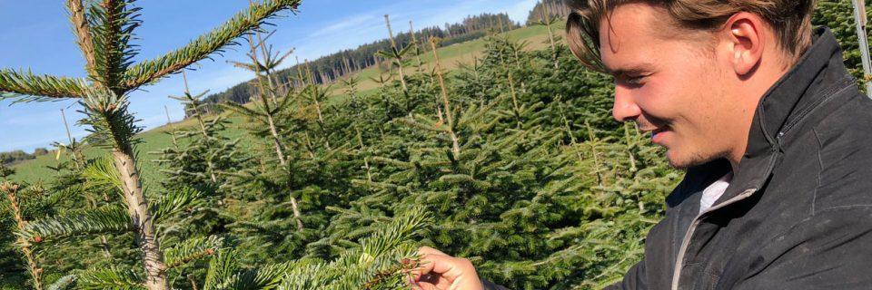 Palmentraum wünscht euch frohe Weihnachten und einen guten Rutsch ins neue Jahr