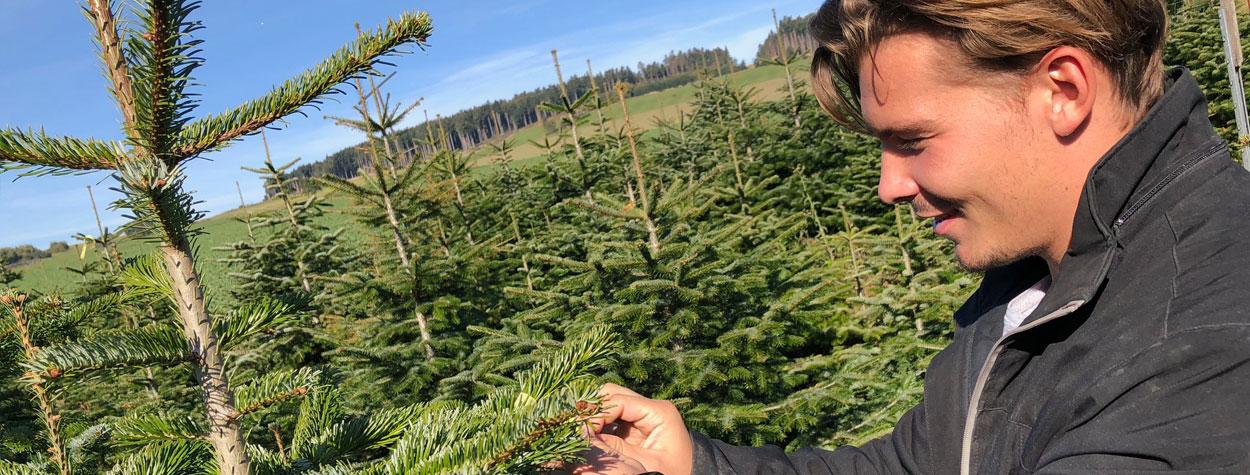 Waldviertler Christbäume von 8.12. bis 23.12. täglich von 9 bis 18 Uhr