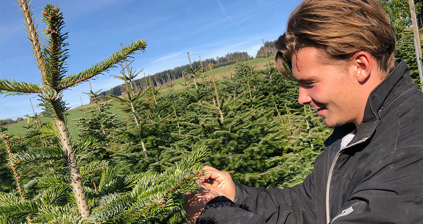 Waldviertler Christbäume bis 24. Dezember